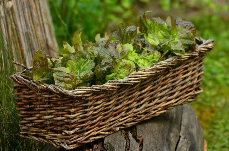salad-1516689_960_720